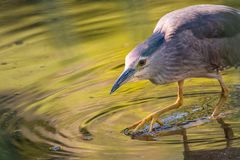 Bird, Water, Beak, Fauna Stock Images