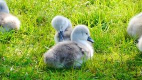 Bird, Water Bird, Fauna, Grass Stock Photos