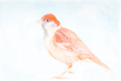 Bird water colour painting illustration Royalty Free Stock Photo