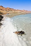 Bird in the water of the dead sea Royalty Free Stock Images