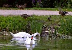 Bird, Water, Fauna, Pond royalty free stock photo