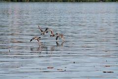 Bird, Water, Fauna, Water Bird royalty free stock images