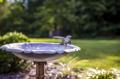 Bird Water Fountain Stock Photography