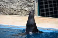 Bursa Zoo, Turkey stock image