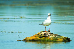 Bird on water with plants Royalty Free Stock Images