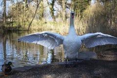 Bird, Water, Reflection, Fauna royalty free stock photography