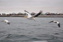Bird, Water, Seabird, Sea stock photography