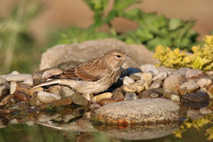 Bird in the water. Bird standing on a stone and looking at the water Stock Image