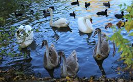 Bird, Water, Water Bird, Fauna stock photography
