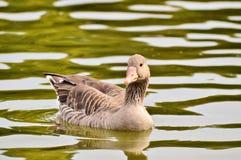 Bird, Water, Water Bird, Fauna Stock Images