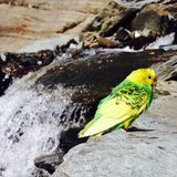 Bird. Waterfall, nature, feel - ios clicks Stock Images
