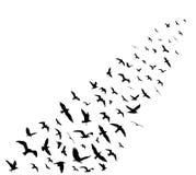 Bird wedge silhouettes on white background. Vector illustration Stock Photo