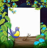 A bird and a white board Royalty Free Stock Images