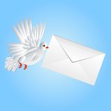 Bird a white pigeon carries a white envelope in a beak Royalty Free Stock Photography