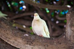 Bird Royalty Free Stock Images