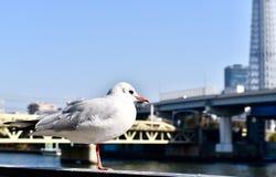 Bird white at sky tree. Bird white japan sky tree stock photography