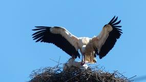 Bird, White Stork, Stork, Accipitriformes stock photos