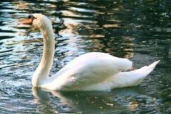 Bird. White water lake animal Stock Photo