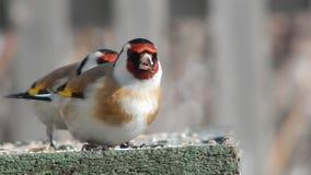 Bird in the wild stock video footage