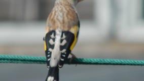 Bird in the wild stock video