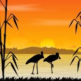 Bird, wildlife. A silhouette of bird, wildlife Royalty Free Stock Photos