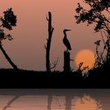 Bird, wildlife. Silhouette view of bird, wildlife Royalty Free Stock Photos
