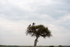 Bird. In the wilds of africa Stock Image