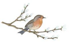 Bird on willow tree. Hand drawn illustrations.  Stock Photography