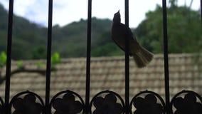 Bird on the window grill stock video