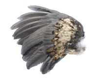 Bird Wing Stock Images