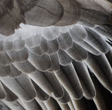 Bird wing detail texture Royalty Free Stock Images