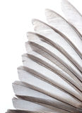 Bird wing feather. Texture background Stock Photography