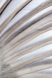 Bird wing texture Royalty Free Stock Photography
