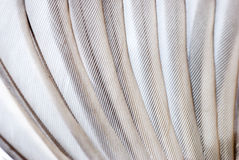Bird wing texture Stock Photos