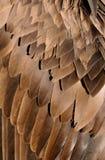 Bird wing Royalty Free Stock Photos