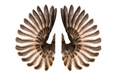 Bird wings isolated on white stock photography