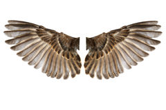 Bird wings isolated on white. Bird wings isolated on a white background stock image
