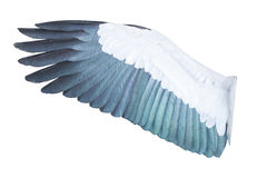 Bird wings isolated on white background Royalty Free Stock Photo