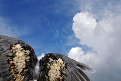 Bird wings in sky Stock Photography