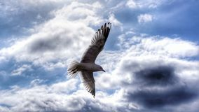 Bird wings Royalty Free Stock Photography