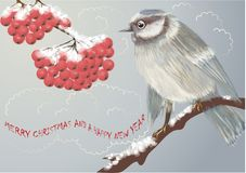 Bird and Winter Berries Royalty Free Stock Image