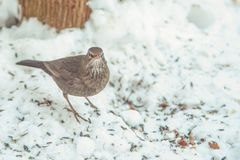 Bird in the winter forest. Wild nature Stock Photos