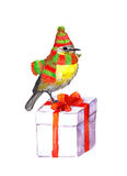 Bird in winter hat, scarf. Christmas gift box. Watercolour Stock Photo