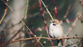 Bird in winter park. Little bird on the tree in winter royalty free stock images