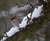 Bird in winter Stock Photography