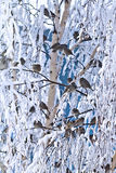 Bird  winter trees Royalty Free Stock Image