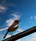 Bird on a Wire. On blue sky background Royalty Free Stock Photo