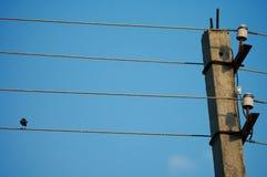 Bird on the wire. Blue sky Stock Photo