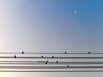 Bird on wire Stock Photography