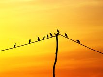 Bird on a wire. A flock of birds sit on a wire, resting against the orange glow of the sunset Royalty Free Stock Photography
